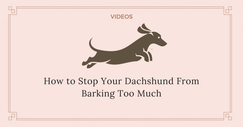 How to stop a dachshund from barking videos